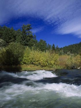Trout Stream at Snake River Near Jackson Hole, WY by Bruce Clarke
