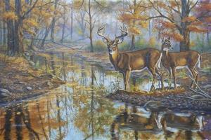 Brookside Retreat - Whitetails by Bruce Dumas