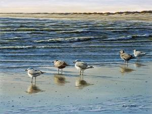 Cape May Herring Gulls by Bruce Dumas