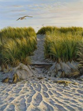Dune Path Gull by Bruce Dumas