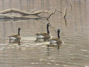 Early Spring Geese Trio by Bruce Dumas