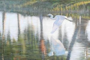 Freedom by Bruce Dumas