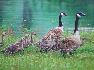 Goose Family Outing by Bruce Dumas