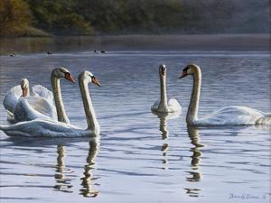 Hanover Swans Five by Bruce Dumas