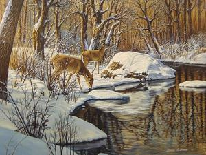 Quinnipiac River White Tails by Bruce Dumas