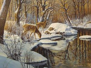Quinnipiac River White Tails by Bruce Dumas