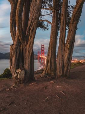 Between the Trees by Bruce Getty