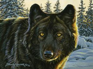 Black Wolf by Bruce Miller