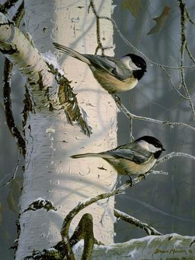Chickadees at Dawn by Bruce Miller