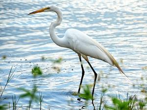 By the Lake Egret by Bruce Nawrocke