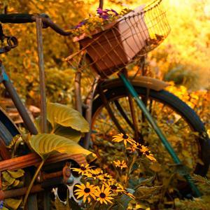 Garden Bike by Bruce Nawrocke