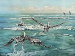 Pelican Beach by Bruce Nawrocke