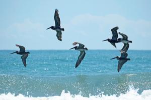 Pelican II by Bruce Nawrocke