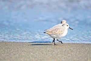 Walk Along The Coast by Bruce Nawrocke