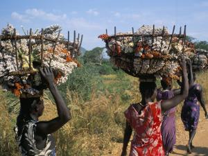 Nuer Women Carrying Sorghum, Gambella Region, Ilubador State, Ethiopia, Africa by Bruno Barbier