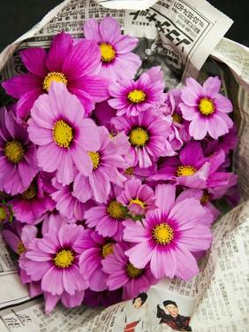 Bouquet of Cosmos Flowers by Bruno Ehrs