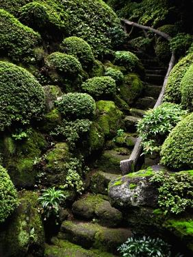 Footpath Through Garden by Bruno Ehrs