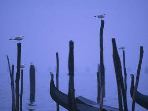 Gondolas in Venice by Bruno Ehrs