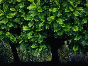 Lush Green Trees in Chiang Mai in Thailand by Bruno Ehrs