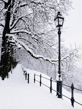 Trees and lamp post in snow by Bruno Ehrs