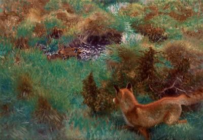 Fox Stalking Wild Ducks, 1913