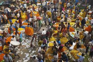 Mullik Ghat Flower Market, Kolkata (Calcutta), West Bengal, India, Asia by Bruno Morandi