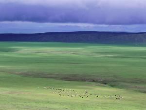 Ovorkhangai Province, Mongolia, Asia by Bruno Morandi