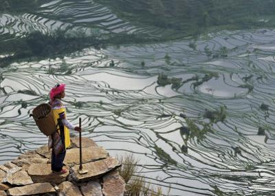 Rice Fields with Water, Yi Woman