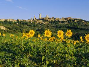San Gimignano and Field of Sunflowers, Tuscany, Italy by Bruno Morandi