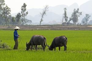 Tam Coc, Ninh Binh Area, Vietnam, Indochina, Southeast Asia, Asia by Bruno Morandi