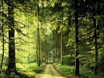 https://imgc.allpostersimages.com/img/posters/buchenwald-weg-frv-hling-wald-buchen-waldweg-jahreszeit_u-L-Q11YHA30.jpg?p=0