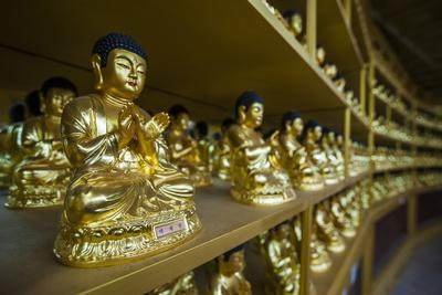 https://imgc.allpostersimages.com/img/posters/buddha-collection-under-the-golden-maitreya-statue-beopjusa-temple-complex-south-korea-asia_u-L-PQ8SZZ0.jpg?p=0