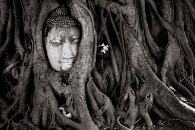https://imgc.allpostersimages.com/img/posters/buddha-head-in-tree-at-ayutthaya-thailand_u-L-Q1BAUYW0.jpg?p=0
