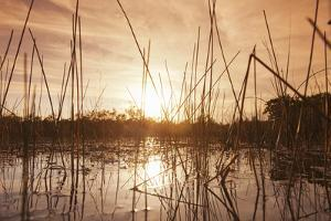 Everglades Swamp at Sunset by Buena Vista Images