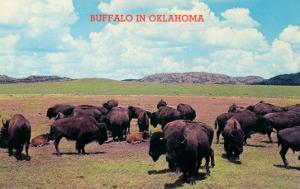 Buffalo in Oklahoma