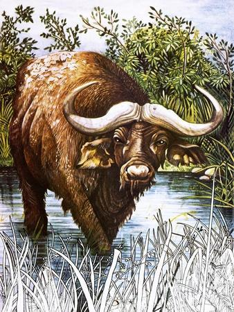 https://imgc.allpostersimages.com/img/posters/buffalo_u-L-PCJ1IE0.jpg?artPerspective=n