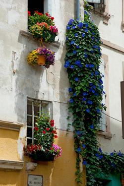 Building with Flower Pots on Each Window, Rue Des Arenes, Arles, Bouches-Du-Rhone