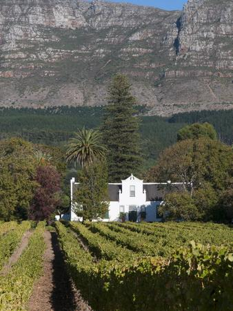 https://imgc.allpostersimages.com/img/posters/buitenverwachting-wine-farm-constantia-cape-province-south-africa-africa_u-L-PFK13W0.jpg?p=0
