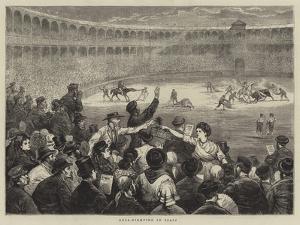 Bull-Fighting in Spain