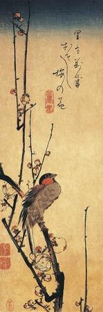 Bullfinch Perching on a Branch of a Japanese Plum Tree