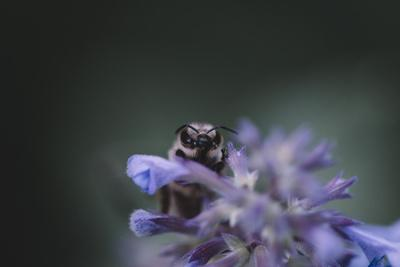 https://imgc.allpostersimages.com/img/posters/bumblebees-and-bees-at-the-work_u-L-Q1EZDEC0.jpg?artPerspective=n