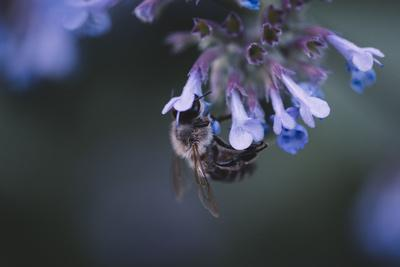 https://imgc.allpostersimages.com/img/posters/bumblebees-and-bees-at-the-work_u-L-Q1EZG9H0.jpg?artPerspective=n