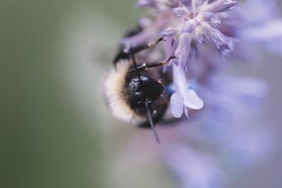 https://imgc.allpostersimages.com/img/posters/bumblebees-and-bees-at-the-work_u-L-Q1EZGYA0.jpg?artPerspective=n