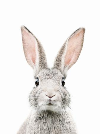 https://imgc.allpostersimages.com/img/posters/bunny-face_u-L-F9IZKF0.jpg?artPerspective=n