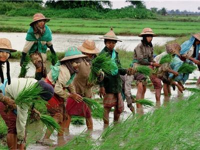 https://imgc.allpostersimages.com/img/posters/burmese-women-plant-rice-at-the-beginning-of-the-monsoon-season_u-L-Q10ORRD0.jpg?p=0