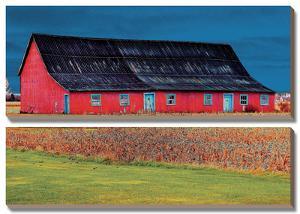 Big Red by Burney Lieberman