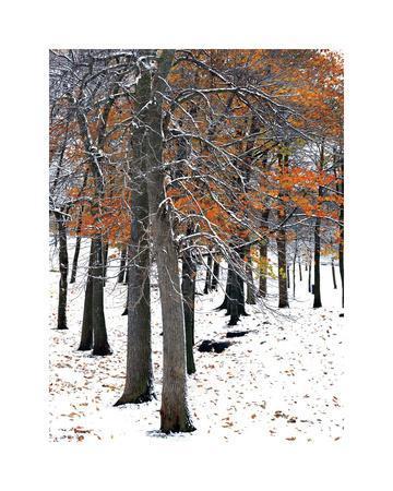 Snowfall II