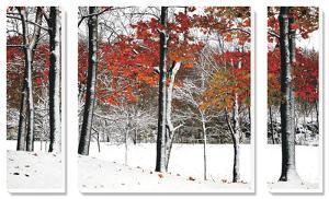 SnowFall by Burney Lieberman