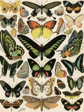 Butterflies and Moths not native to Europe