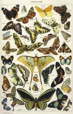Butterflies in Larousse